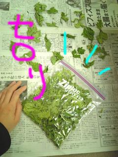 干し野菜6.jpg