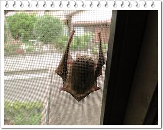 蝙蝠1.JPG
