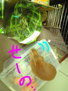 袋ウサギ2-1.jpg