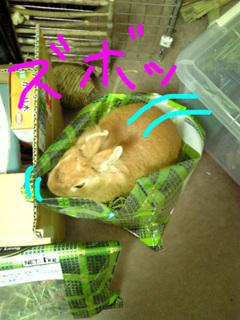 袋ウサギ2-2.jpg