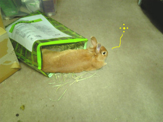 袋ウサギ4-1.jpg