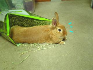 袋ウサギ4-2.jpg