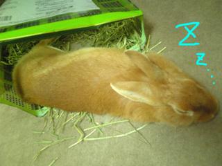 袋ウサギ4-3.jpg