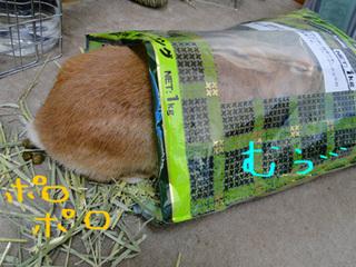 袋ウサギ5-1.jpg