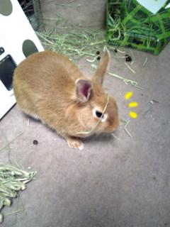 袋ウサギ9-1.jpg