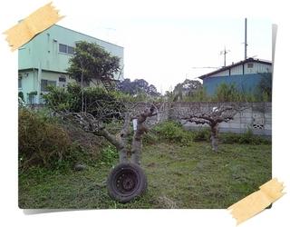 林檎2.JPG
