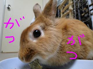 牧草チップス2-4.jpg