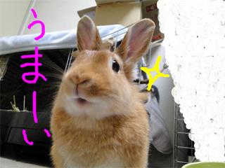 牧草チップス2-5.jpg