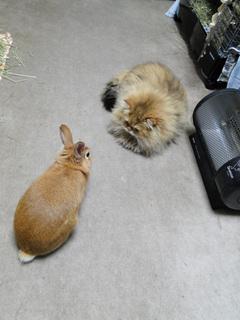 猫と兎4.jpg