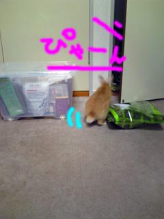 猫と兎7.jpg