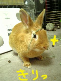 袋ウサギ9-3.jpg