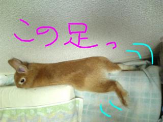 にょーん3.JPG