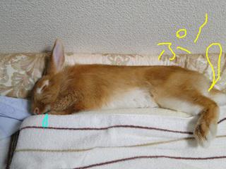 布団で寝る1.jpg