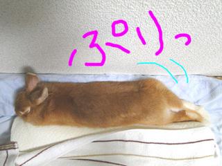 布団で寝る3.jpg