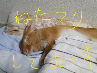 布団で寝る4.jpg