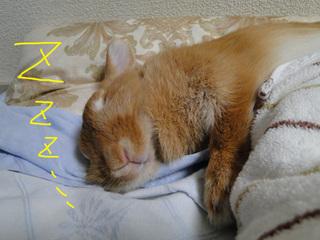 布団で寝る5.jpg