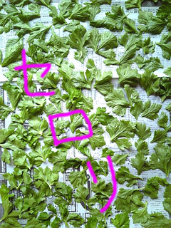 干し野菜2.jpg