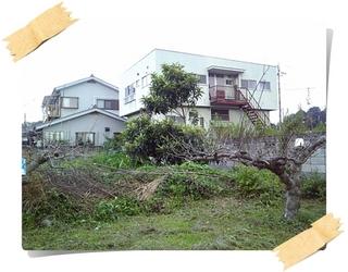 林檎1.JPG
