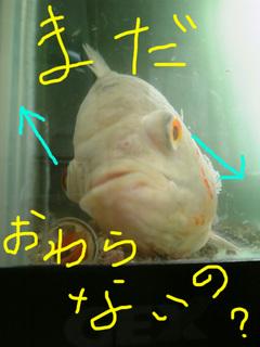 水替え嫌い5.jpg