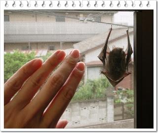 蝙蝠3.JPG
