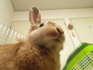 袋ウサギ7-1.jpg