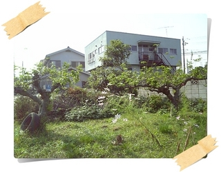 林檎3.JPG