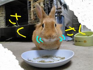 牧草チップス2-3.jpg